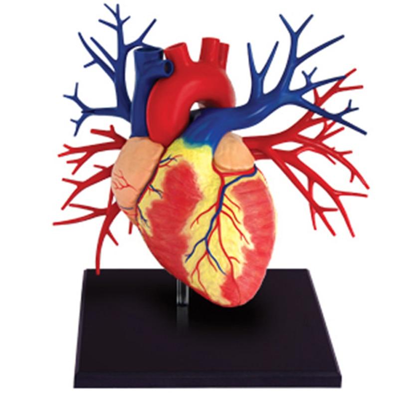 Educational 4D Children Human Body Assembled Blocks Model Science ...
