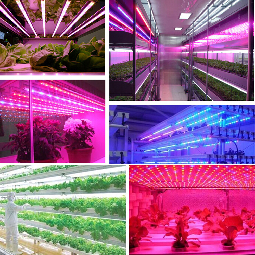 Aliexpress buy led grow lights dc12v growing led strip plant aliexpress buy led grow lights dc12v growing led strip plant growth light lamp full spectrum 660nm red 455nm blue for greenhouse hydroponic from parisarafo Gallery