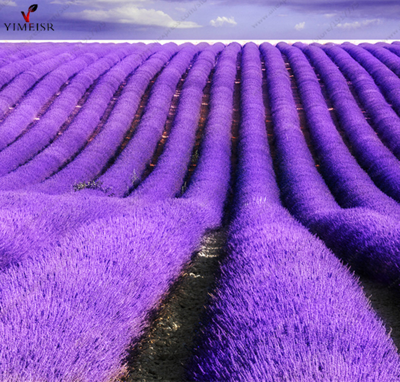 Provence Lavender seeds purple Lavandula vanilla seeds fragrant organic lavender seeds plant flower Home Garden Bonsai100pcs/bag