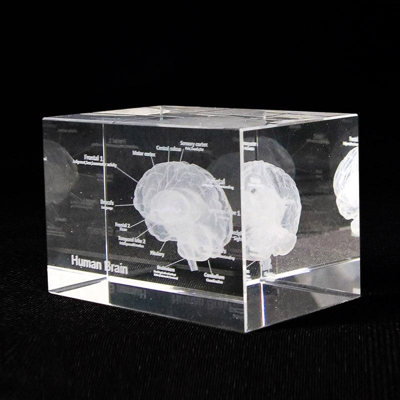 Cheap product 3d brain model in Shopping World