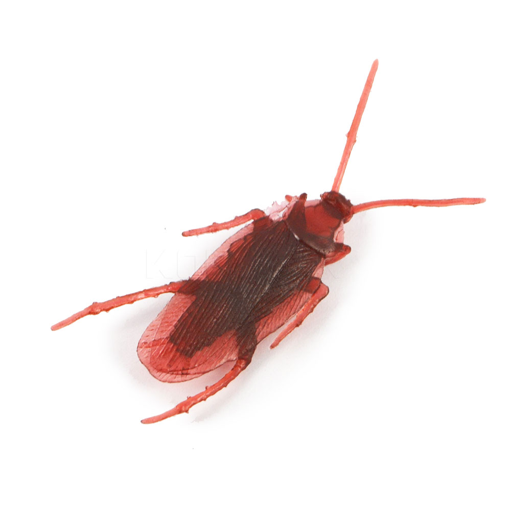 Awesome Baby Cockroaches Pictures