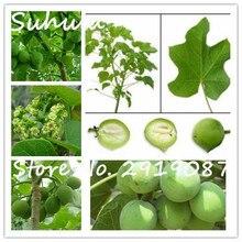 Физические ореха барбадос removal of jatropha семени 8 семена/мешок главная сад семена растений в домашнем саду посадки