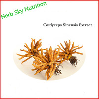 Herb Sky Nutrition Hot Sale Factory Supply 100 Natural Cordyceps Sinensis Extract Powder Caterpillar Fungus Free