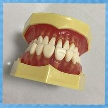 28 шт. Съемная Модель Стоматологическая модель зубов для обучения и моделирования