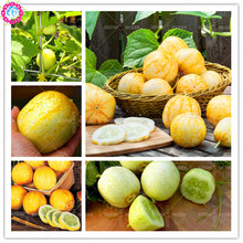 Buy  ruit Plant Bonsai Seeds,potted home&garden  online