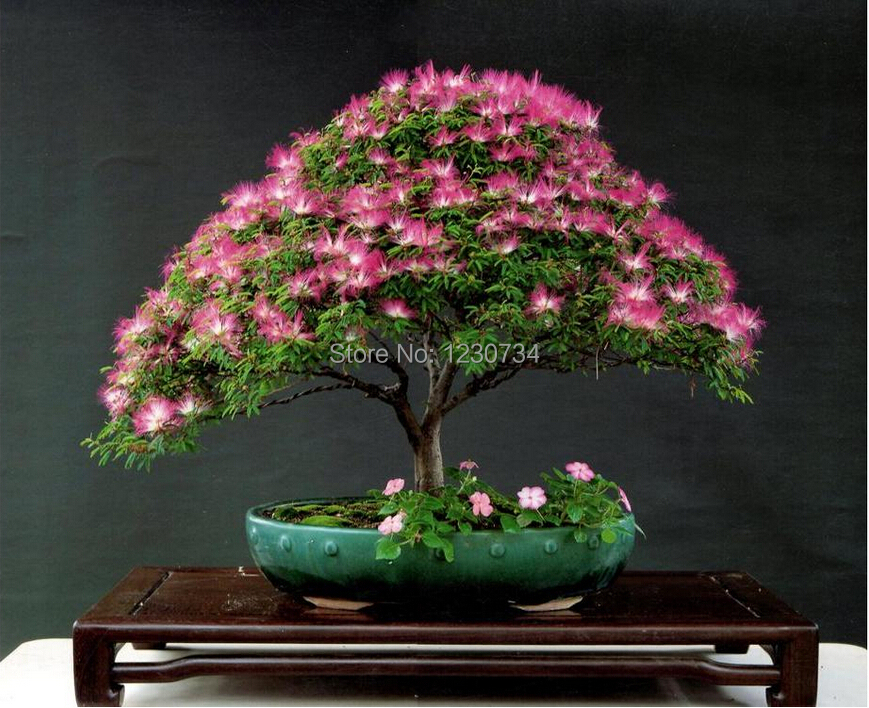 how to make a mimosa bonsai