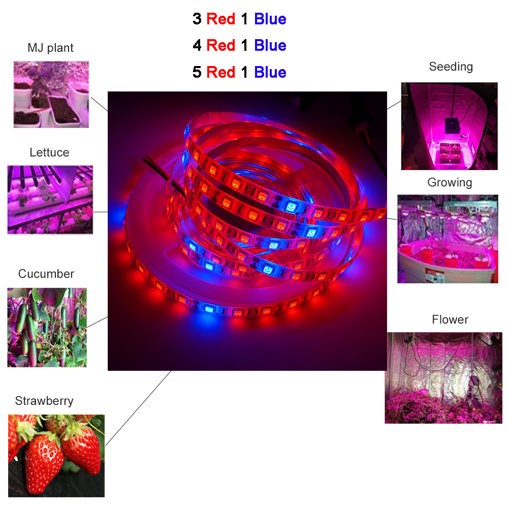 DC12V 5M Phyto Lamps Full Spectrum LED Strip Light 300 LEDs 5050 Chip LED Fitolampy Grow Lights For Greenhouse Hydroponic Plant
