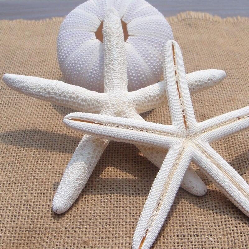 10pcs Lot 13 15cm Natural Starfish Decoration Sea Shells Beach Seashells Craft Display Taxidermy Decorative On Aliexpress Alibaba Group