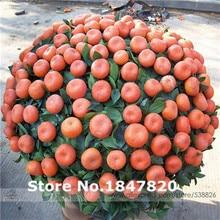 ААА Редкий orange Семена, 10 видов 30 Смешивать Цвета Семена цветов, высокая выживаемость для Дома и Сада.