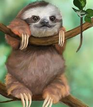 Full Square/Round Drill 5D DIY Diamond Painting Animal sloth Embroidery Cross Stitch 5D Home Decor 5d full round