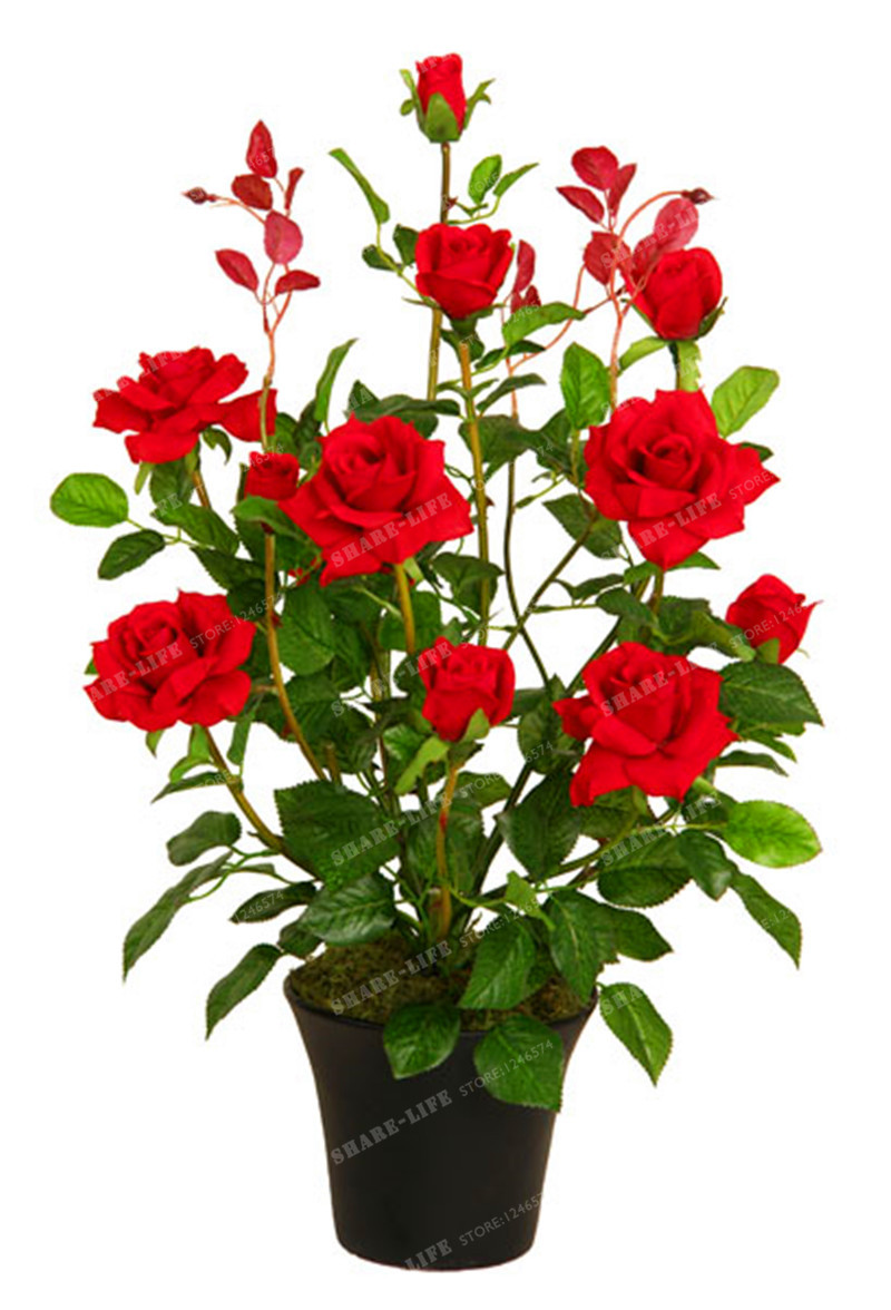 100pcs chinese lovely rose tree plant seeds beautiful flowereasy to 100pcs chinese lovely rose tree plant seeds beautiful flowereasy to grow ideal diy home garden potted balconyyard flower plant in bonsai from home garden izmirmasajfo
