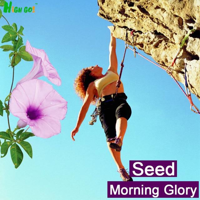 Free Shipping!!!!!!climbing Petunia,flower Seeds,decoration Garden, Supplies,30pcs Plants