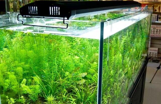 Aquarium Beleuchtung | Odyssea 4 Rohre T5ho Beleuchtung Mit Leds 24 60 Cm Quad Aquarium