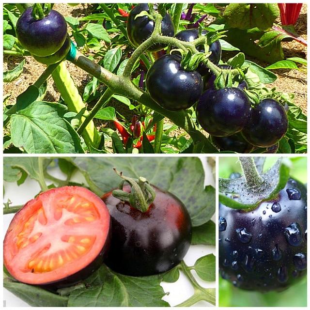 200 /bag black tomato seeds vegetable and fruit seeds  Resistant to diseases ornamental-plant fruit-tree-seedlings