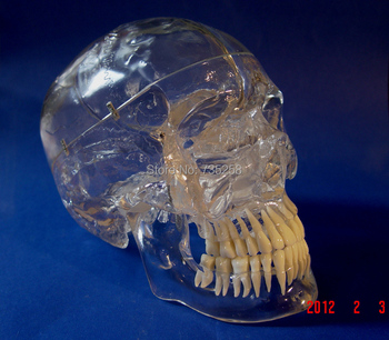 цена на 1:1 Simulation Skull With The Simulation Model of The Tooth,Transparent Skull Model