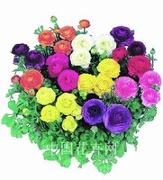 200PCS Ranunculus Flower Seeds Home Garden DIY Plants Persian Buttercup Seed Flower Bulbs Free Ship