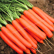 200pcs/bag Organic vegetables carrot fruit Five inches ginseng potted plant for home garden bonsai