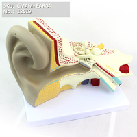 CMAM/12519 Ear Anatomy Giant Human Ear, 6 times full size, 3 part, Ear Eye Nose Throat Models > Ear Models