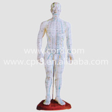 BIX-Y1008 Body Acupuncture Main Model (In Chinese)(50CM) Australia Freight Free, AU Freight Free WBW283