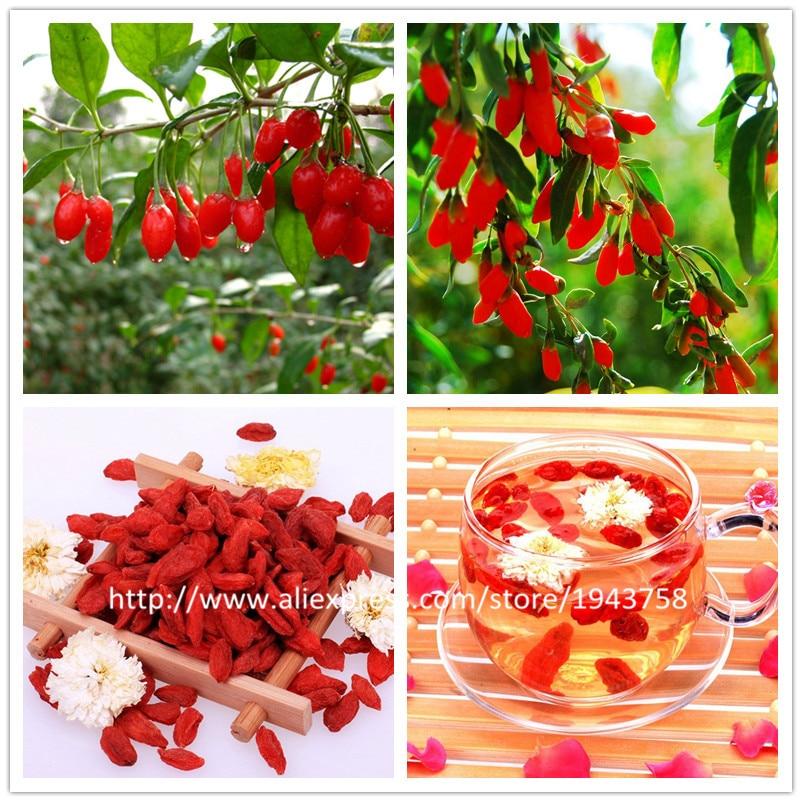 ягоды годжи цена