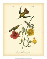 Animal paintings of John James Audubon Mango Hummingbird Hand painted canvas art High quality