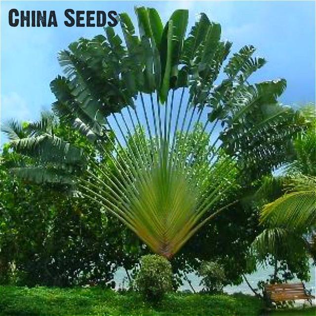 Vendita calda 10 pz/borsa Palma bonsai Impianto Fai Da Te Per La Casa Decorazione del Giardino Bonsai Piante Albero bonsais Plantas Trasporto Libero