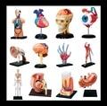 4D MASTE человеческий мозг, глаза, уха, кости, стороны, мышцы, череп, сердце, желудок, зуб собран медицинский обучающие головоломки игрушки cutawaymodel