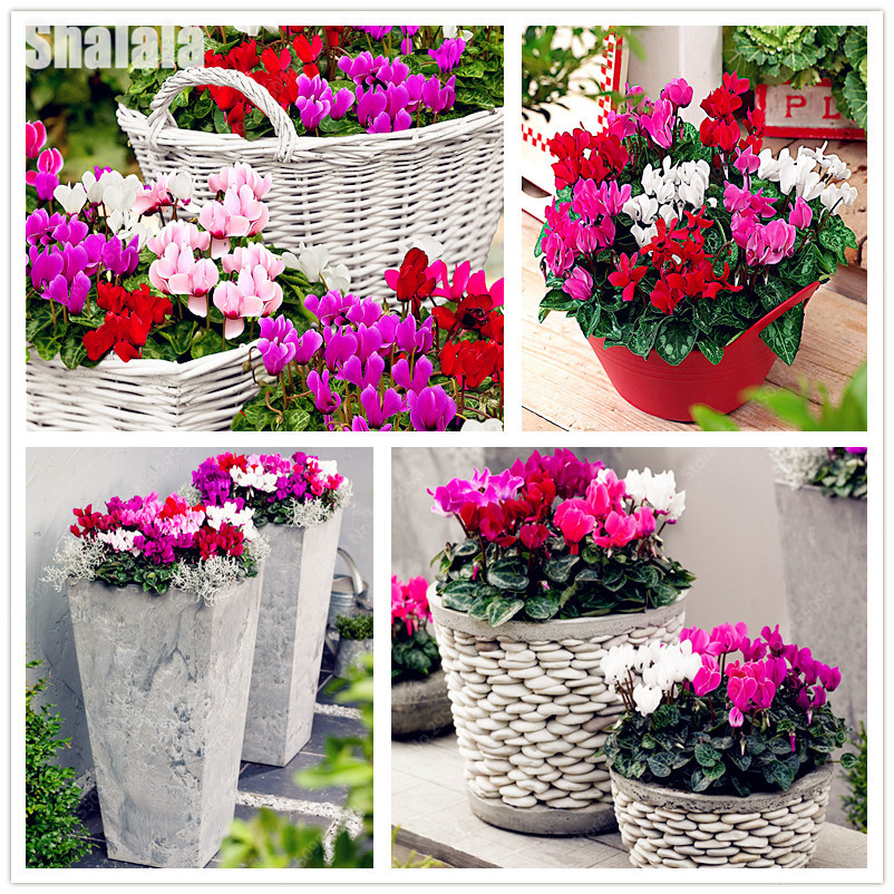 Pinterest piante perenni oltre 25 fantastiche idee su for Piante da balcone perenni