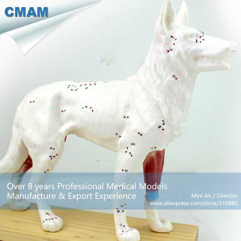 12005 CMAM A05 veterinario perro canino acupuntura modelo, Ciencias ...