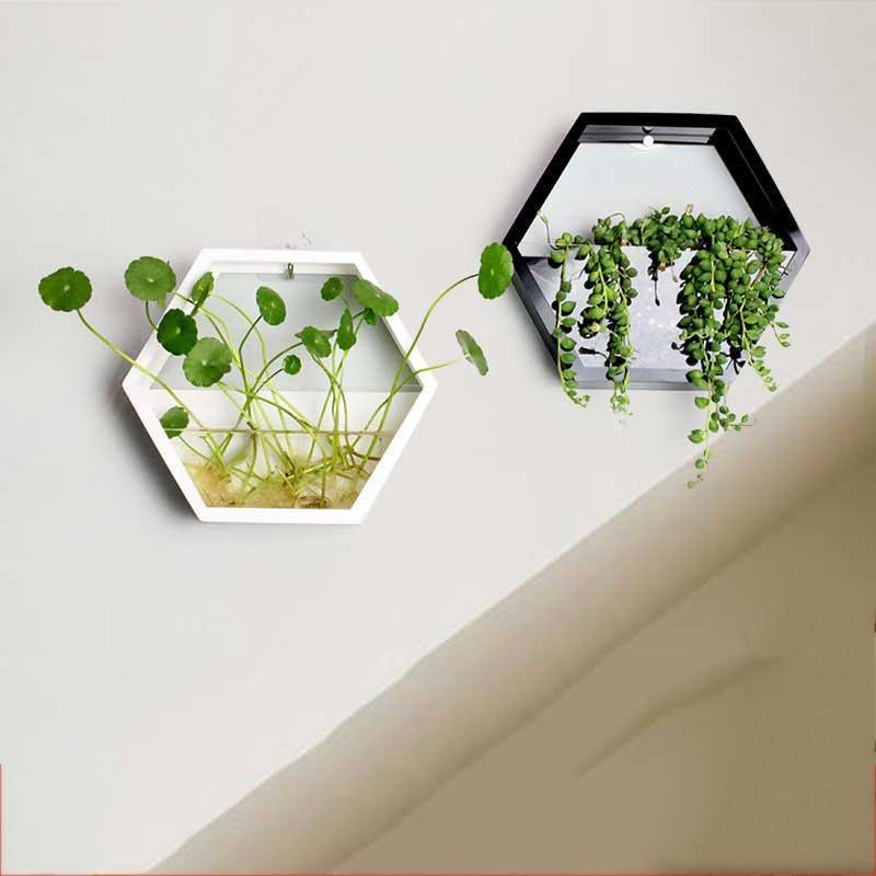 Brief Handmade Acrylic Chlorophytum Flower Pot Hanging Wall Scindapsus Hydroponics Plant Vase Home Living Room Modern
