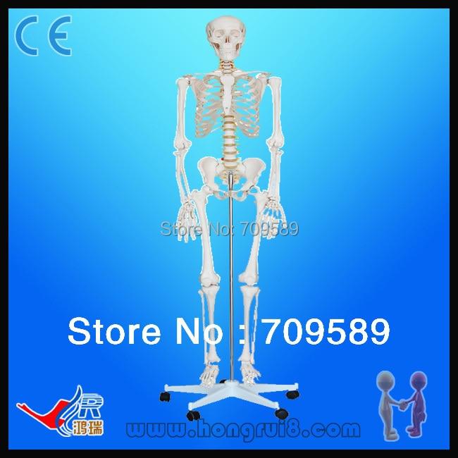 Iso haute qualité modèle de squelette humain grandeur nature médicale 180 cm squelette humain