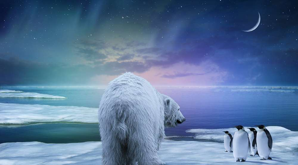 Modern Poster Abstract Polar Bear Penguin Northern Lights