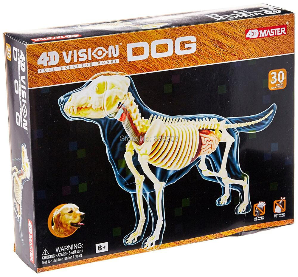 4d Master visión pelo de oro perro anatomía esqueleto completo ...