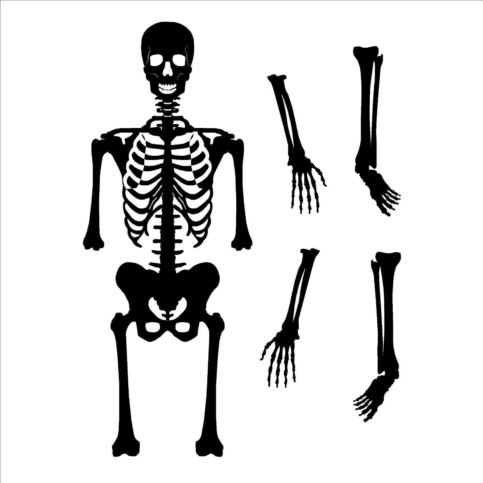 Asombroso Esqueleto Con Etiquetas Imágenes - Anatomía de Las ...