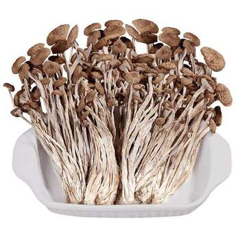 250g-500g Tea Tree Mushroom  Agrocybe chaxingu Polysaccharide Enhanced immunity, anti-aging and skin whitening