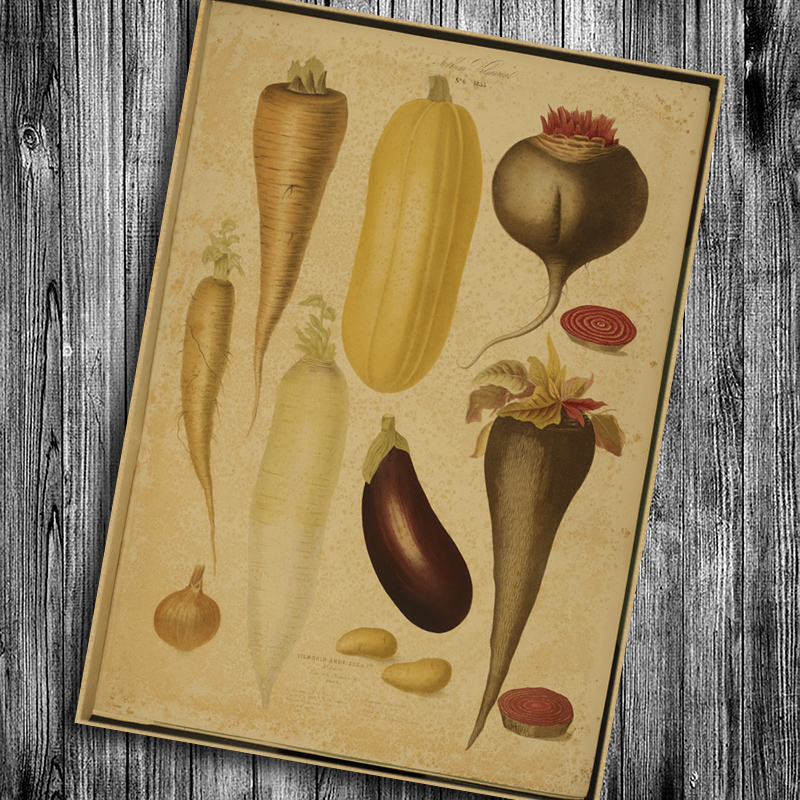 Hot sale vintage kraft paper fruit about durian wall art sticker ...