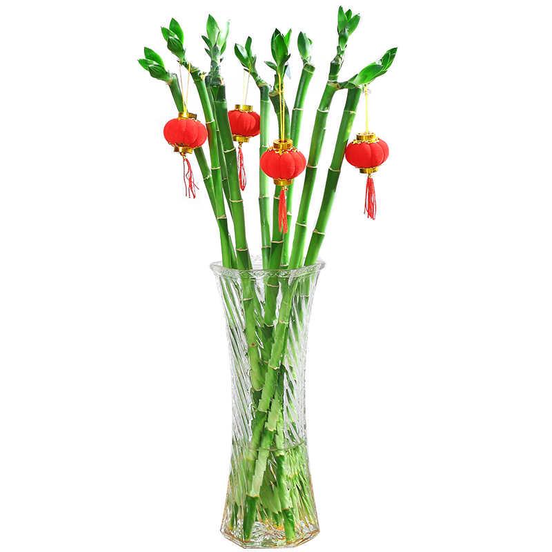 تخفيضات كبيرة! 30 قطعة من النباتات الخيزران محظوظ بونساي حظا سعيدا النباتات حيوية عنيد شرفة غرفة المعيشة حديقة المنزل بونساي