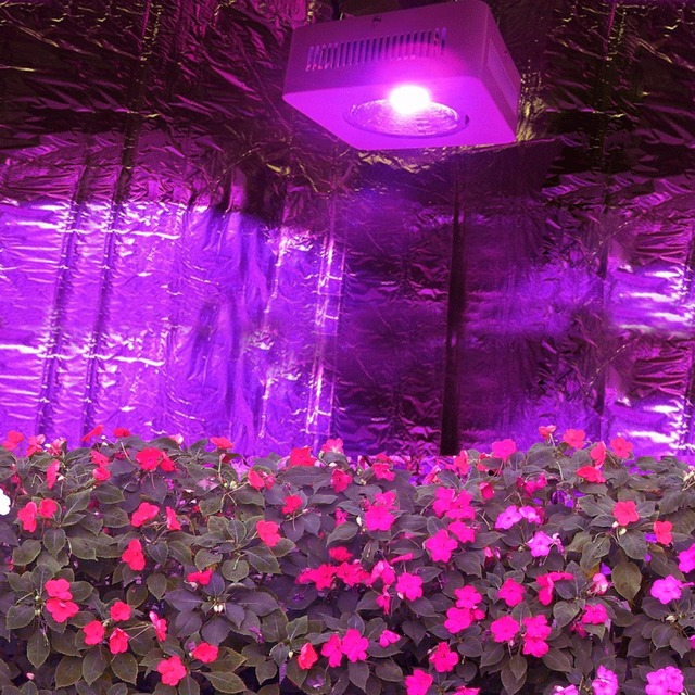 USA Stock COB Reflector Hydroponic Lightings Full Spectrum LED Grow Light  200w DIY Grow Box With