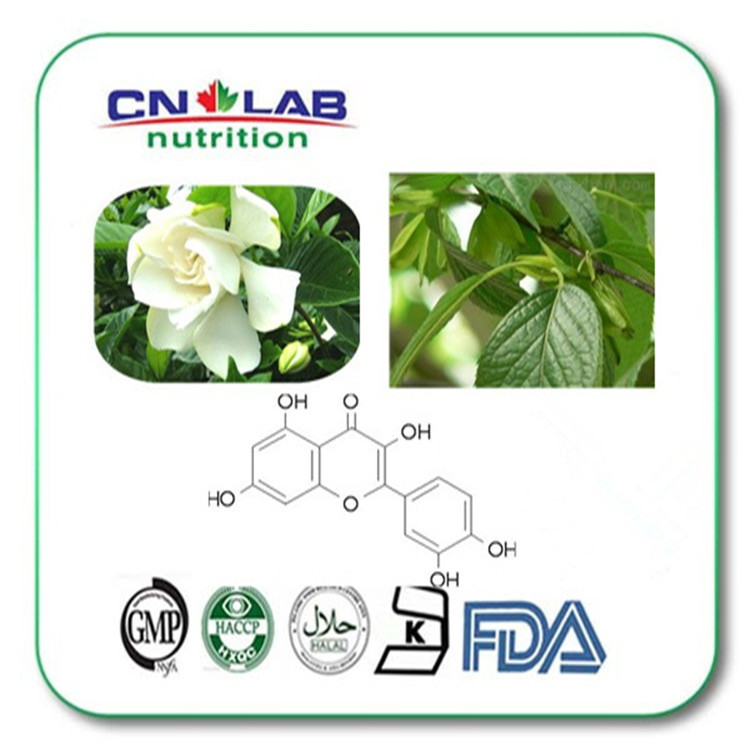 ФОТО Pure Natural Penthorum Chinese Extract Powder Quercetin
