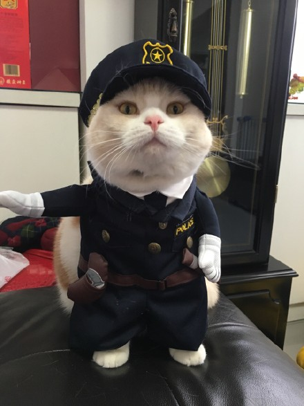 New-2016-whimsy-Free-shipping-so-funny-Pet-cat-dog-Dress-uniform-suit-clothes-hat-become