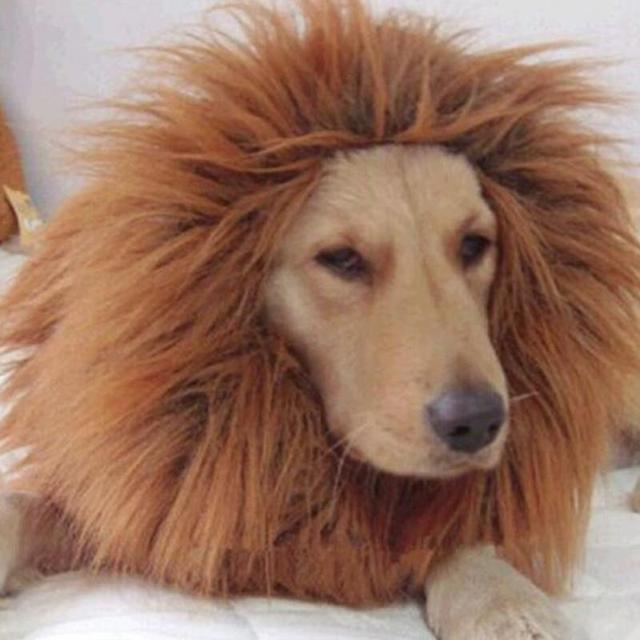 pet costume dog lion wig lovely large dogs halloween pet apparel cat fancy dress up clothes lion mane wig