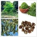 10pcs/bag Moringa seeds moringa oleifera moringa tree seeds, Edible seeds DRUMSTICK TREE bonsai potted plant for home garden