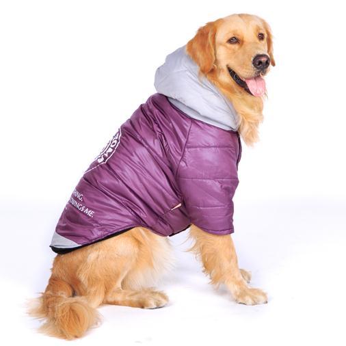 Labrador Retriever Dog Jacket