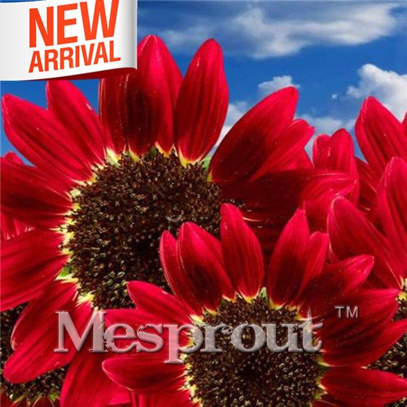 20 шт Редкие Красный подсолнечника семена бонсай Красный Фортуна Подсолнечник однолетний бонсай для сада декоративные цветы