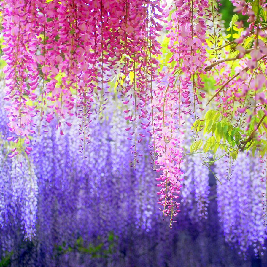 12pcs/lot 110cm Artificial Flower String Hanging Plant Silk Wisteria Fake Wedding wall Home Garden valentine's day Decoration