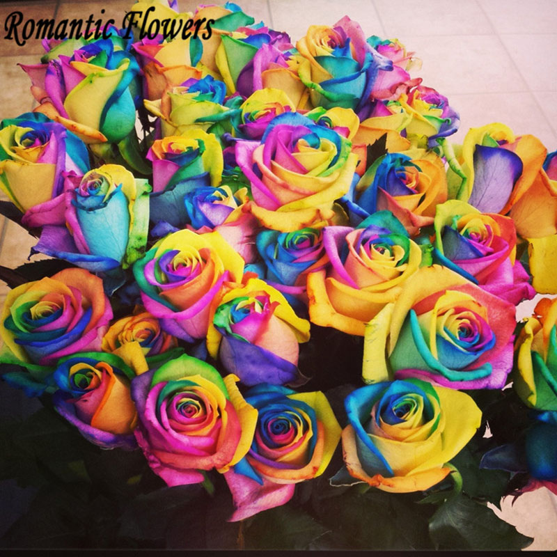 colorful rainbow roses day valentine flower seeds so beautiful 100 particles bagin bonsai from home u0026 garden on alibaba