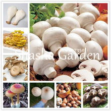 Sales! 200 Pcs Delicious Green Vegetable Giant Mushroom bonsai Organic Vegetable bonsai Bonsai Plant in Garden and Courtyard(China)