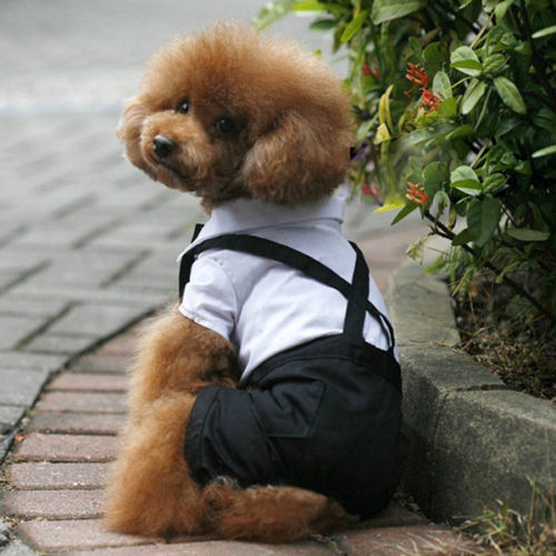 Cute Pets Clothes Pet Dog Puppy Clothes Tuxedo Bowtie Shirt Suit Wedding  Groom Outfit S/ - Online Buy Wholesale Dog Wedding Outfits From China Dog Wedding
