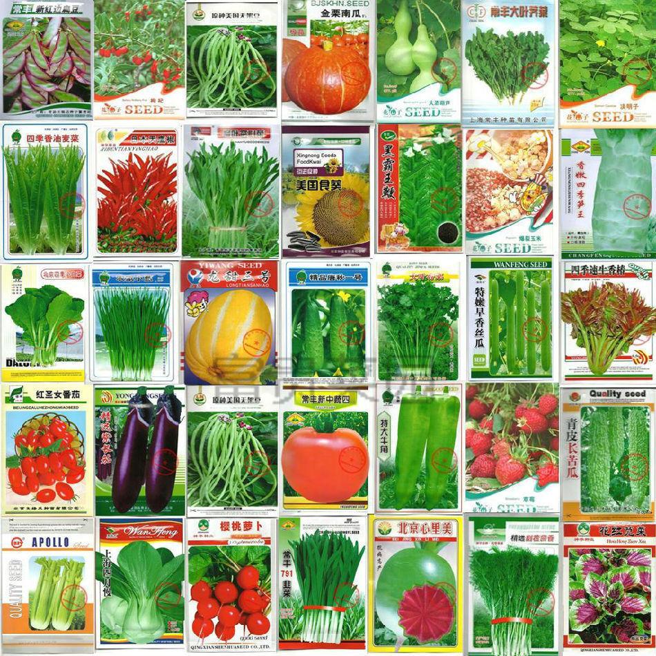 2000 seeds lower price sales balcony garden windowsill plant 36