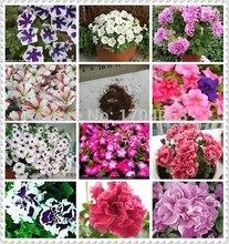 Wholesale authentic Petunia flower rare plants, 100pcs